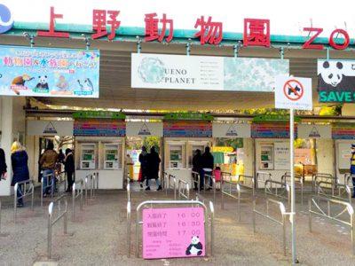 上野動物園の注目動物や園内マップまとめ【決定版】