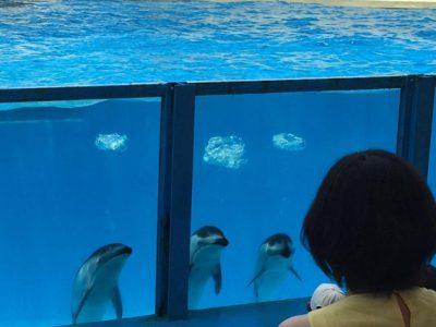 中部で絶対行きたい!おすすめの水族館スポットを一挙公開