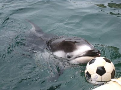 近畿で絶対行きたい!おすすめの水族館スポットを一挙公開