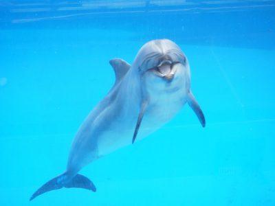 四国で絶対行きたい!おすすめの水族館スポットを一挙公開